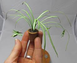 spider plant in brown pot 1 12 scale realistic handmade