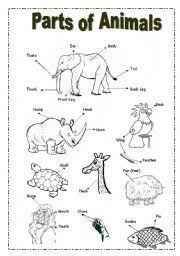 brilliant ideas of animals parts of the body worksheets with