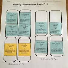 chromosome allele geek pinterest genetics
