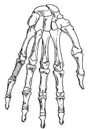 coloring hand skeleton img 18906