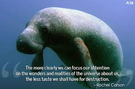 Quotes That Will Change What You Think About Zoos   Features   PETA    Rachel Carson