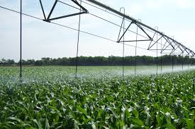 irrigated corn corn irrigation project variable n application in corn sensor