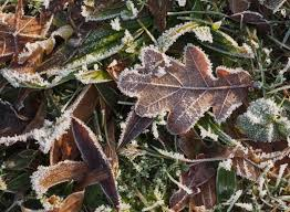 frozen leaves and grass free stock images by libreshot