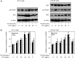 green tea polyphenols causes cell cycle arrest and apoptosis in