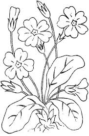printable coloring pages for kids with flowers flower coloring
