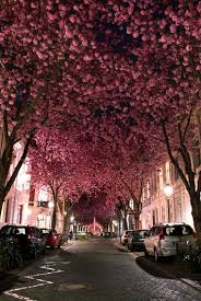 Cherry Blossom Home Decor Top Most Amazing Tree Tunnels Beautiful Places In The World Cherry