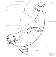 monk seal swimming underwater coloring page free printable