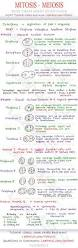 65 best cellular respiration images on pinterest teaching