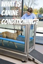147 best canine animal rehab images on pinterest veterinary