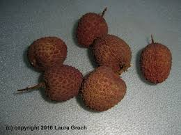 lychee fruit peeled will you like lychees you u0027ll have to find them first u2013 beyondbites
