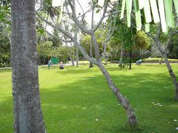 panoramio photo of villa escudero plantation resort