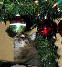 pet safety tips for holiday holiday safety tips for your pets