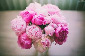 peonies bouquet bouquet pink peonies flowers flowers wallpapers 2048x1365