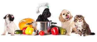 thanksgiving recipes safe for pets rufus and