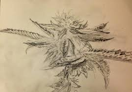 drawn pot plant pencil drawing pencil and in color drawn pot