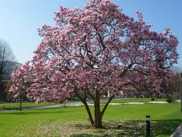 28 pictures of spring trees spring trees related keywords
