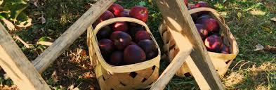 apple picking in greater rochester ny and the finger lakes kids