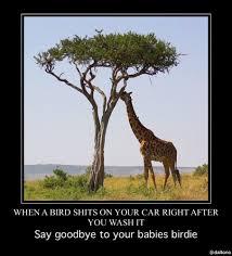 Meme Giraffe - giraffe eating baby birds steemkr