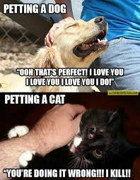 Dog Cat Meme - petting a dog vs petting a cat the meta picture