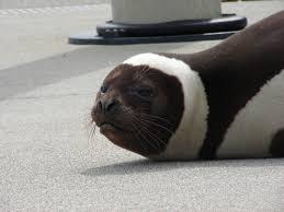 Seal Ribbon Ribbon Seal S V Bright Water