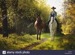 tobiano paint horse stock photos u0026 tobiano paint horse stock