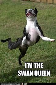 Dancing Dog Meme - i m the swan queen i has a hotdog dog pictures funny pictures
