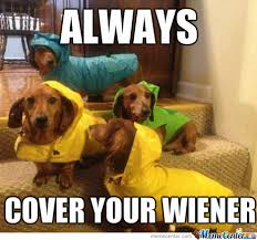 Wiener Dog Meme - wiener dog memes best collection of funny wiener dog pictures