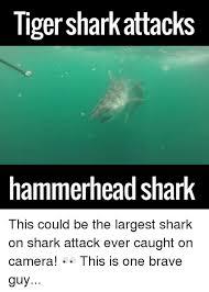 Shark Attack Meme - 25 best memes about shark attacks shark attacks memes