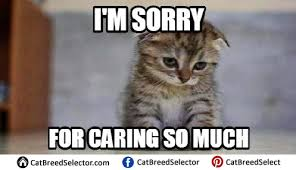 Sad Memes About Love - really sad cat meme funny cute angry grumpy cats memes