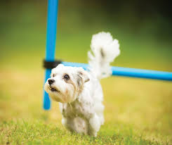 fun backyard games for dogs home outdoor decoration