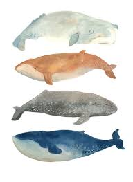98 ideas pictures of whales to print on emergingartspdx com