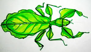 how to draw a leaf insect