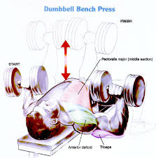 Dumbbell Bench Press Form How To Do A Dumbbell Bench Press Part 40 How To Do 1 1 4