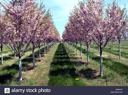 100 state flower list flower fields archives driving to