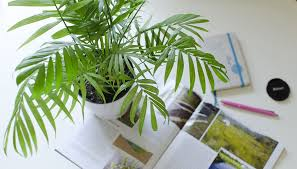 Easy Care Indoor Plants Five Easy Care Indoor Plants U2013 Al Fresco