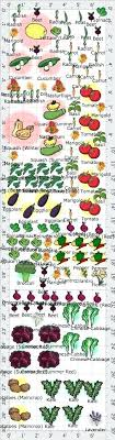 Companion Planting Garden Layout Best Vegetable Garden Layout Vegetable Garden Plans Companion