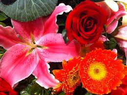 November Flowers File Hk Central Flowers City Hall Art Expo Red Daisy N Roses N