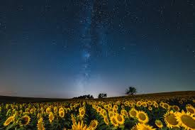 sunflower galaxy how i captured a field of sunflowers blooming under the milky way