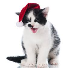 20 kittens who are ready for christmas pictures cattime