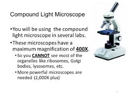 compound light microscope function what is the maximum magnification of a light microscope www
