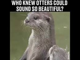 Otter Meme - who knew otters could sound so beautiful youtube