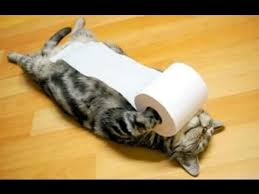 Toilet Paper Funny Funny Cats Messing With Toilet Paper Funny Videos Compilation