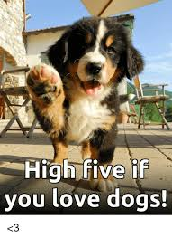High Dog Meme - high five if you love dogs 3 dogs meme on me me