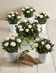 bridal flowers wedding flowers wedding bridal bouquets ideas m s