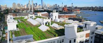 planning an urban vegetable garden edible brooklyn