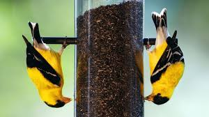 hang up a bird feeder where you can see it