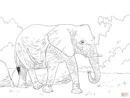 african bush elephant walking coloring page free printable