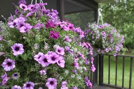 keeping potted plants and hanging baskets beautiful all summer