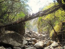 fundraiser by patrick a rogers the living root bridge project