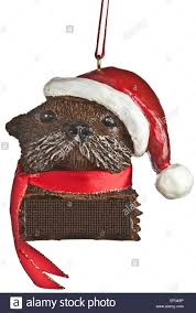 otter cut out stock images u0026 pictures alamy